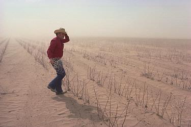 Cotton farmer in desert wind storm walking amid desiccated crops, Texas  -  Jim Brandenburg
