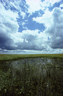 Prairie potholes, a unique area where shallow depressions resulting from the scouring of glaciation create important waterfowl nesting habitat, Ordway Prairie, South Dakota  -  Jim Brandenburg