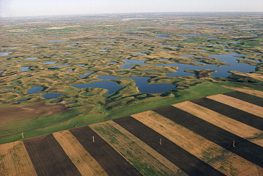 Farmlands encroaching on prairie potholes, North Dakota