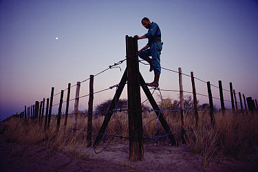 African Elephant (Loxodonta africana) fence with Warden, erected to protect agricultural crops from elephant damage, Namibia  -  Jim Brandenburg