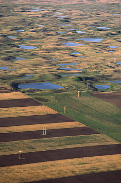 Farmlands encroaching on prairie potholes, South Dakota  -  Jim Brandenburg