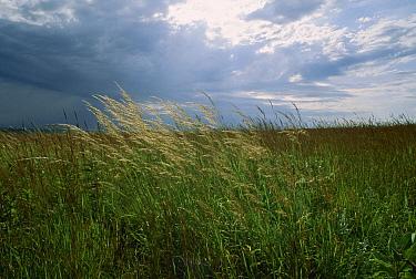 Tallgrass prairie under stormy skies, South Dakota  -  Jim Brandenburg
