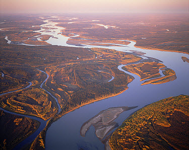 Yukon River, aerial view, Alaska  -  Michio Hoshino