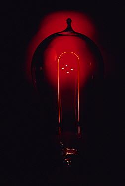 Bamboo (Dendrocalamus sp) filament used in Edison's first light bulbs  -  Jim Brandenburg
