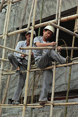 Bamboo (Dendrocalamus sp) scaffolding, assembled by construction workers, used in building skyscrapers, Hong Kong, China  -  Jim Brandenburg