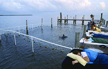 Bottlenose Dolphin (Tursiops truncatus) during Tampa Bay capture with EarthWatch assistants sleeping next to enclosure, Florida  -  Flip Nicklin