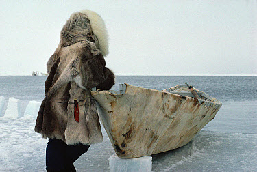 Bowhead Whale (Balaena mysticetus) hunter, an Inuit in traditional clothes with sealskin boat waiting for whales, Barrow, Alaska  -  Flip Nicklin