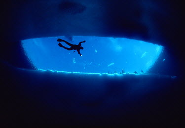 Diver Glenn Williams swimimg under an open ice lead as tour group watches from above, Admiralty Inlet, Baffin Island, Canada  -  Flip Nicklin