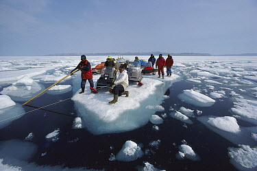 Inuit guide and film crew ferrying supplies and snowmobiles on icefloe, Arctic  -  Flip Nicklin