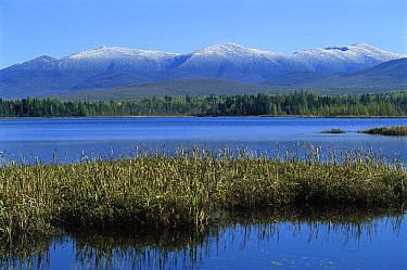 Wetland with White Mountains, New Hampshire  -  Jim Brandenburg