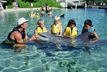 Bottlenose Dolphin (Tursiops truncatus) interacting with children, Dolphin Quest Learning Center, Hawaii  -  Flip Nicklin