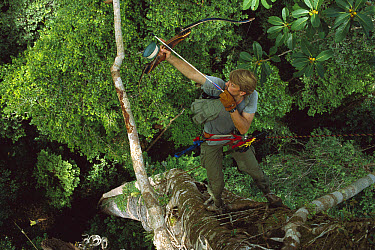 Researcher Tim Laman high up in tree, shoots arrow into the rainforest canopy, Borneo  -  Mark Moffett