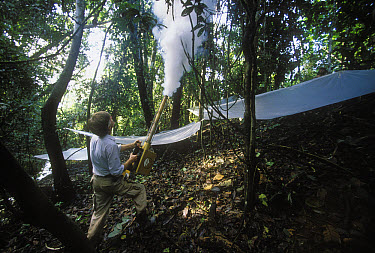 Entomologist Terry Erwin fogs rainforest canopy with biodegradable pesticide, insects fall onto plastic sheets for collection and study, Pacaya-Samiria National Reservation, Peru  -  Mark Moffett