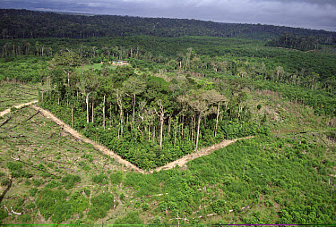 Deforestation study plot, biological dynamics for forest fragments project near Manaus, Brazil  -  Mark Moffett