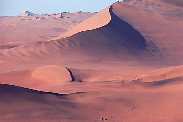 Gemsbok (Oryx gazella) trio walking along sand dunes, Namib Desert, Namibia  -  Jim Brandenburg