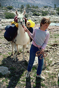 Llama (Lama glama) lead by Shannon, a young girl, in the Sierra Nevada mountains, California  -  Larry Minden