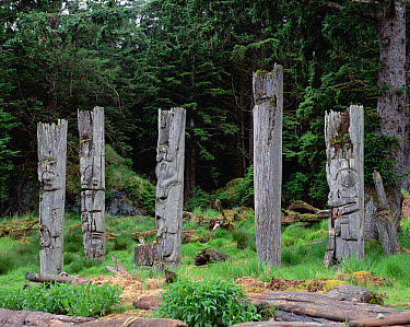 Haida totem poles, Queen Charlotte Islands, British Columbia, Canada  -  Michio Hoshino