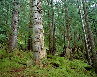 Native Alaskan Haida totem poles, Queen Charlotte Islands, British Columbia, Canada  -  Michio Hoshino
