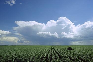 Tractor in corn field, Minnesota  -  Jim Brandenburg