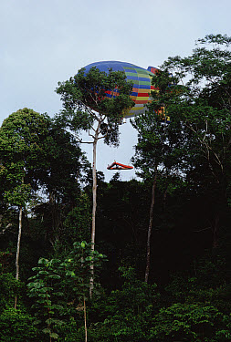 Research sled lowered onto rainforest canopy by a dirigible, Cameroon  -  Mark Moffett