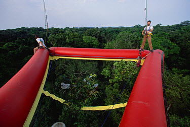Canopy researchers with balloon canopy raft, Cameroon  -  Mark Moffett
