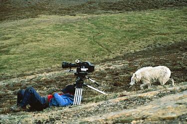 Arctic Wolf (Canis lupus) investigating Jim Brandenburg who is napping, Ellesmere Island, Nunavut, Canada, Photograph By Stephen Durst  -  Jim Brandenburg