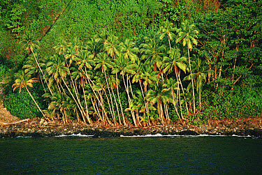 Cocos Island covered with rainforest, receives eight meters of rain a year, 300 miles off of the Pacific coast of Costa Rica  -  Flip Nicklin