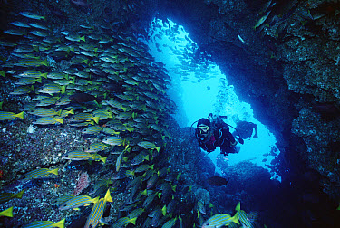 Two scuba divers swimming through sea cave with schooling Grunts, Cocos Island, Costa Rica  -  Flip Nicklin