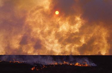 Prairie burn in Tallgrass Prairie National Preserve, Oklahoma  -  Jim Brandenburg