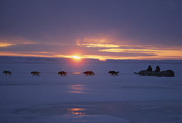 Inuits dog sledding in midnight sun, Ellesmere Island, Nunavut, Canada  -  Jim Brandenburg