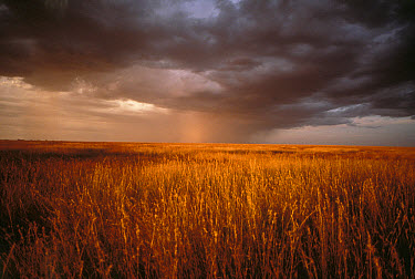 Rain storm over savannah, Serengeti National Park, Tanzania  -  Mitsuaki Iwago