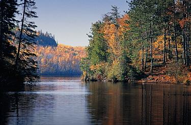 Timber Wolf (Canis lupus) pack along water's edge, Moose Lake, Boundary Waters Canoe Area Wilderness, Minnesota  -  Jim Brandenburg