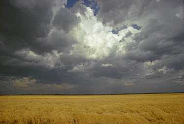 Nimbus storm clouds over prairie, Minnesota  -  Jim Brandenburg