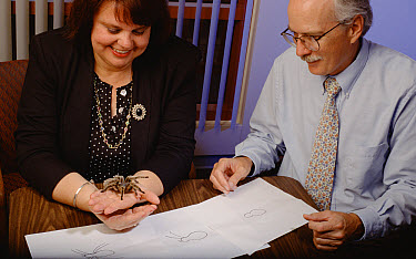 Stanford professor and arachnophobia expert, C Barr Taylor, working with patient to cure her acute arachnophobia, California  -  Mark Moffett