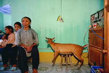 Schoolgirls Vu Hong Nhung and Hang Thi Thu share their home with a stuffed deer, Tam Dao National Park, Vietnam  -  Mark Moffett