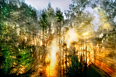 Sunlight filtering through trees, Minnesota  -  Jim Brandenburg