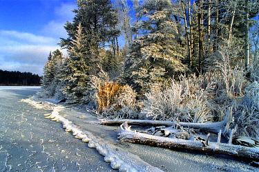 Moose Lake shoreline covered in frost, Minnesota  -  Jim Brandenburg