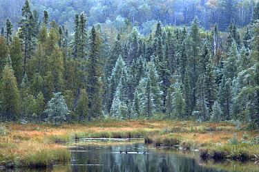 Baptism River, Northwoods, Minnesota  -  Jim Brandenburg