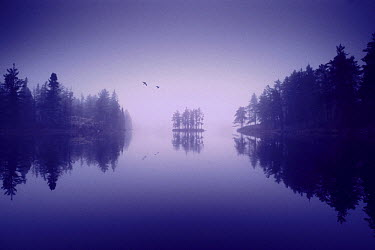 Two birds flying over misty Discovery Lake, Boundary Waters Canoe Area Wilderness, Minnesota  -  Jim Brandenburg