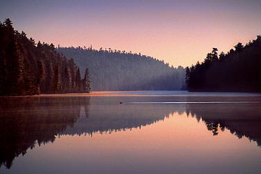 Loon (Gavia sp) on Sean Walsh Lake, Scotland  -  Jim Brandenburg
