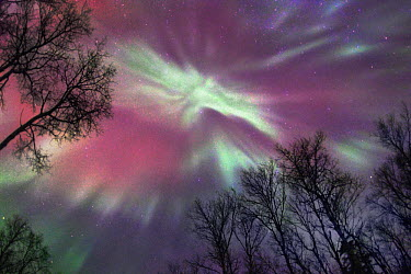 Aurora borealis, Northwoods, Minnesota  -  Jim Brandenburg