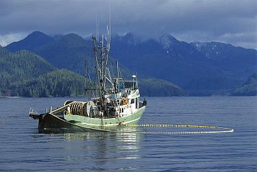 Purse-seine fishing for salmon, Clayoquot Sound, Vancouver Island, British Columbia, Canada  -  Flip  Nicklin