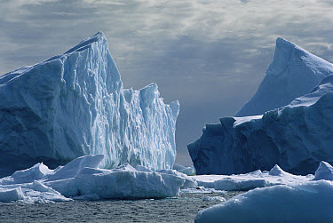 Icebergs and ice floes in the Weddell Sea, Antarctica  -  Mitsuaki Iwago