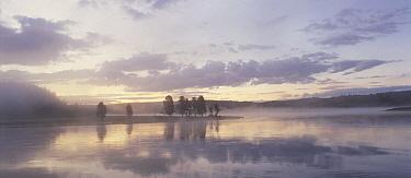 Early morning on the Yellowstone River, Yellowstone National Park, Wyoming  -  Shin Yoshino