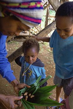 Red Palm Weevil (Rhynchophorus ferrugineus) larvae cooked by Kutapae family, Hala, Papua New Guinea  -  Mark Moffett