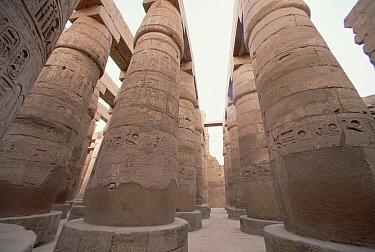 Hieroglyphs cover pillars of Karnak Temple, Valley of the Kings, Egypt  -  Mark Moffett
