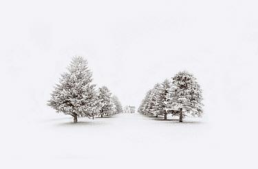 Farm house and tree-lined road in winter, Minnesota  -  Jim Brandenburg