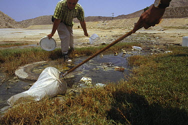Herpetologist Ted Papenfuss collects endemic fish living in sulphurous water near the base of Geno Mountain, Iran  -  Mark Moffett