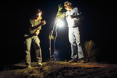 Mark Moffett and Houshang Ziaie using light to attract insects at night on the dunes outside Zabul, Iran  -  Mark Moffett