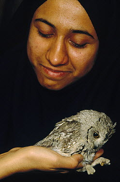 Aspiring biologist holds owl caught in mist net in the guest house, Kerman, Iran  -  Mark Moffett